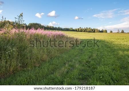 Oblique field. A summer landscape - stock photo