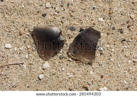 obsidian flakes on sandy ground in Death Valley National Park - stock photo