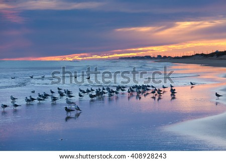 OBX Outer Banks sea gulls on sunset beach, North Carolina, NC, USA - stock photo