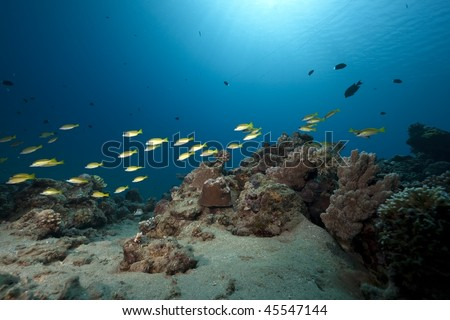 ocean,coral and fish - stock photo