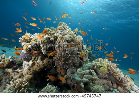 Ocean, coral and fish taken in the Red Sea. - stock photo