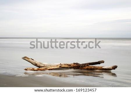 Ocean driftwood - stock photo