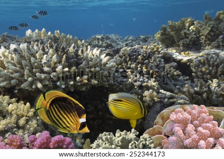 Ocean full of life. underwater coral reef in open deep sea - stock photo
