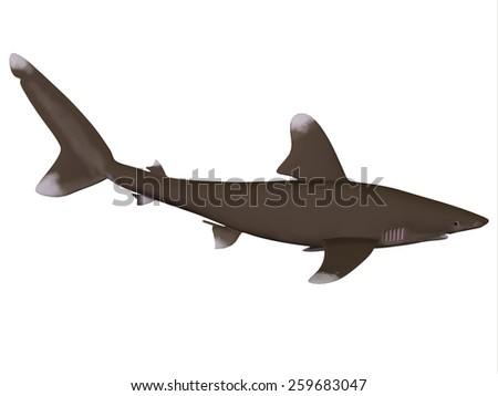 Oceanic Whitetip Shark Profile - The Oceanic whitetip shark is a large predatory fish with rounded fins that inhabits tropical and warm temperate seas. - stock photo