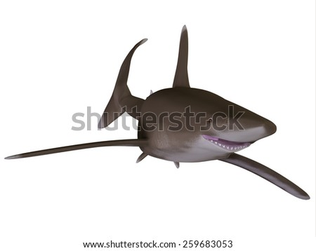 Oceanic Whitetip Shark - The Oceanic whitetip shark is a large predatory fish with rounded fins that inhabits tropical and warm temperate seas. - stock photo