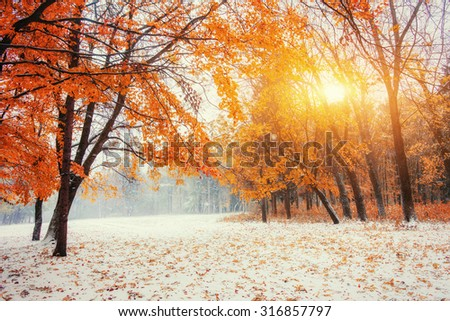 October mountain beech forest with first winter snow  - stock photo