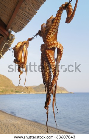 Octopus drying in the sun in the Greek Islands - stock photo