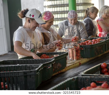 ODESSA, UKRAINE - 25 September 2015: The working process of production of tomatoes to canned fruit and vegetable factory. Workers on the production of canned food. Processing vegetables. - stock photo