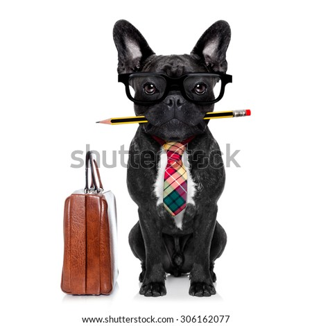office businessman french bulldog dog with pen or pencil in mouth with bag or suitcase isolated on white background - stock photo