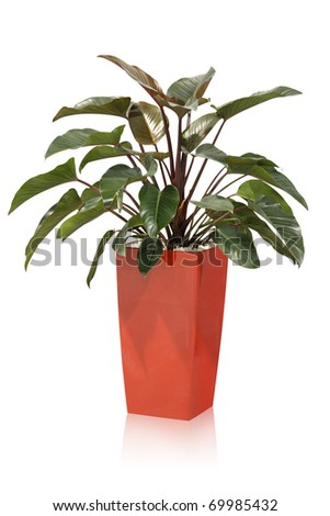 Office plant - tropical - stock photo