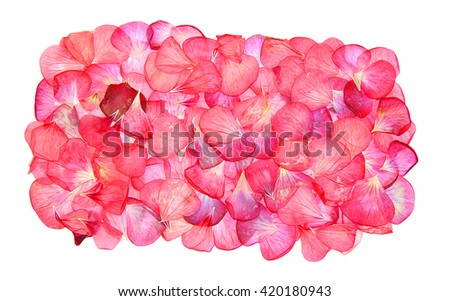 oil draw of the border of red pink brown geranium perspective, dry paint delicate flowers and petals of pelargonium, isolated on white background scrapbook pressed, border, edging - stock photo