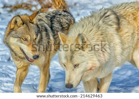 Oil painting of two wolves from pack - stock photo