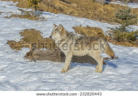 Oil painting of wolf with prey - stock photo