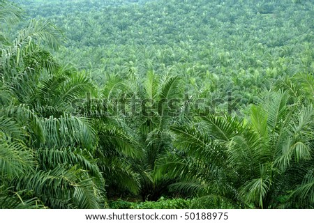 oil palm estate - stock photo