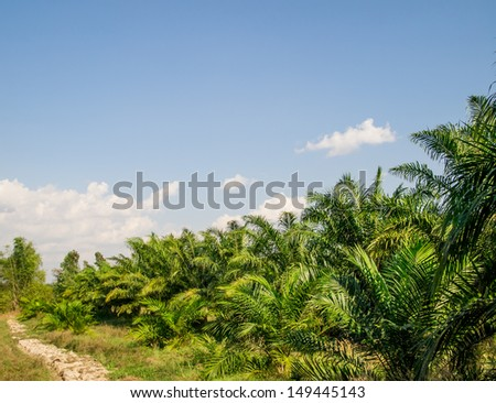 oil palm plantation in Thailand with blue sky - stock photo
