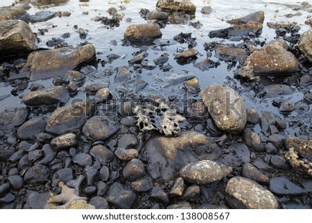 Oil spill on the sea shore - stock photo