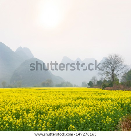 Oilseed rape field in spring, located in Yangshuo County, Guangxi Province, China. - stock photo