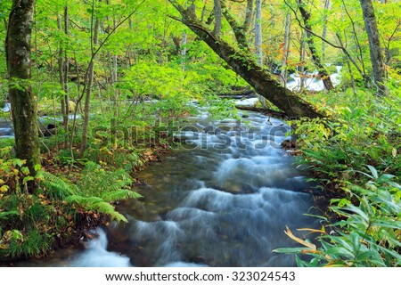Oirase Stream (Oirase Keiryu), the mountain stream outlet draining Lake Towada in Aomori Prefecture, Tohoku region, Japan. The most famous and popular autumn colors destinations in Japan. - stock photo