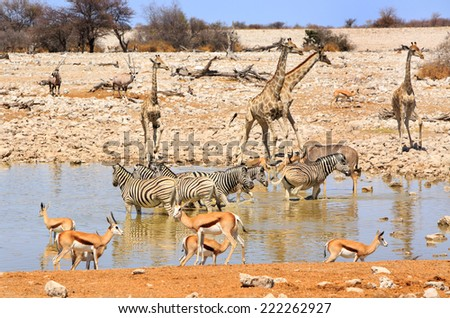 Okaukuejo Waterhole in Etosha with many different species of animals including giraffe, kudu, oryx springbok - stock photo