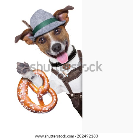 oktoberfest dog  smiling happy  with bavarian  pretzel bread besides a white blank banner or placard - stock photo