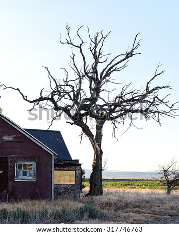 Old abandoned house with windows on red walls next to a dead gnarled tree - stock photo
