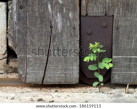 old aged weathered wood surface of a gray color old country house door with rusty roller and rail installed with rusty metal plate with a small tiny cute green plant growing on the ground - stock photo