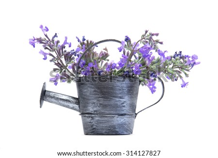 Old aluminium watering can with purple flowers isolated on white background - stock photo