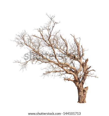 Old and dead tree isolated on white background - stock photo