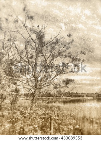 Old and derelict tree with many naked branches leaning out towards the lake, textured in sepia tones with scratches and stains.   - stock photo