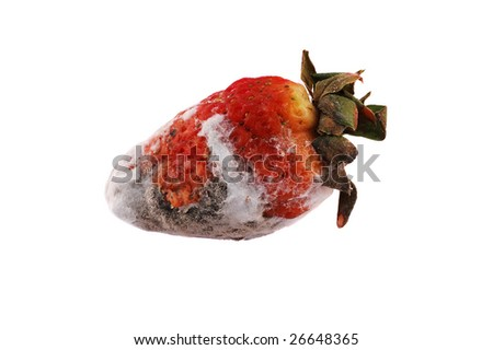 old and mold strawberry - stock photo