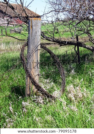 old barbed wire fence - stock photo