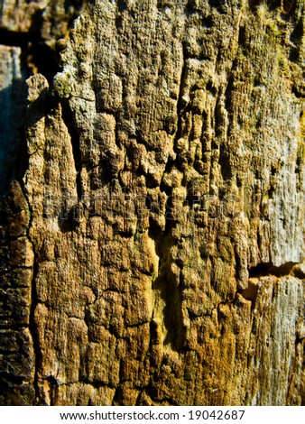 Old bark - stock photo