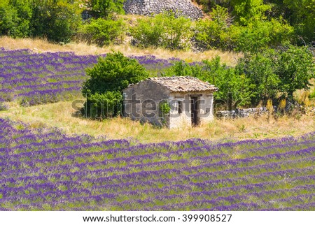 Old barn and rows of a beautiful purple lavender field near town of Sault. Provence, France - stock photo