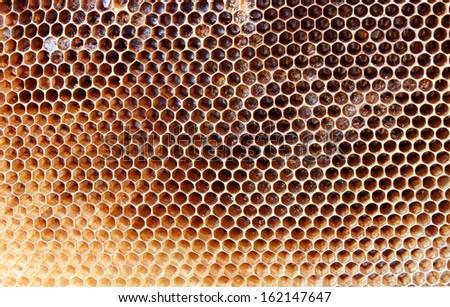 old bee nest - stock photo