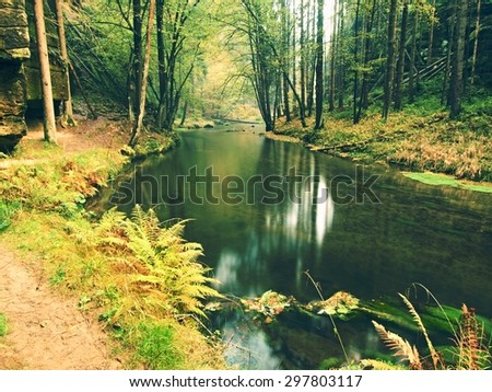 Old beeches above clear water of mountain river. Big mossy sandstone boulders lay in water. First leaves turn to yellow and orange color, the fall is beginning. - stock photo