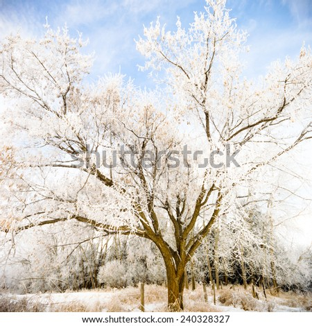 old big frozen tree on color background with blue sky - stock photo