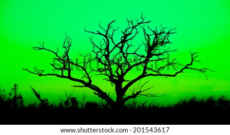 Old big tree have many branch and do not have leaves on Green back ground - stock photo