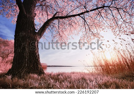 Old big tree. Infrared photography. Spring nature composition. - stock photo