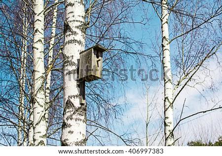Old birdhouse on a birch tree - stock photo