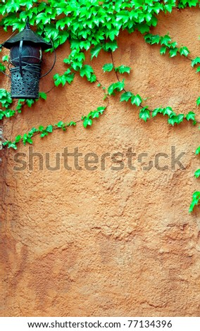 old brick wall and grape-vine - stock photo