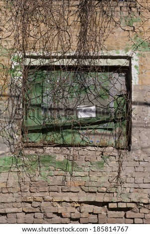 old brick wall with a window covered by ivy vertical - stock photo