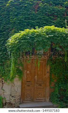 Old building an ddoor covered with ivy plant - stock photo