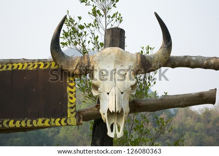 Old cattle skull - stock photo