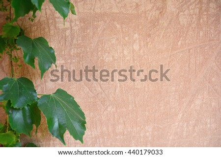 Old cement wall with green leaves - stock photo