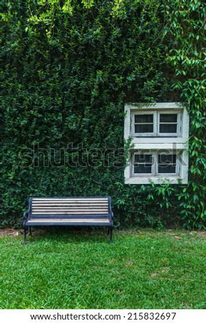 Old Chair at front wall with window and wall ivy plant  - stock photo