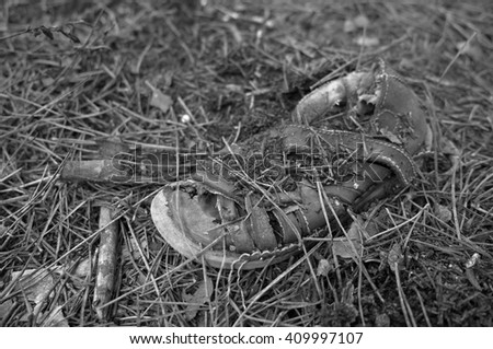 Old child sandal abandoned in the forest. Strange, missed childhood, child abuse and crime investigation related - stock photo