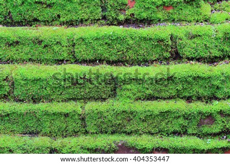 Old concrete Brick Wall with Moss - stock photo