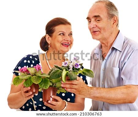 Old couple holding flower. Isolated. - stock photo