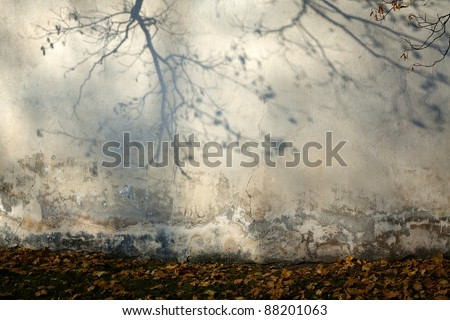 Old cracked wall with a shadow of a tree - stock photo