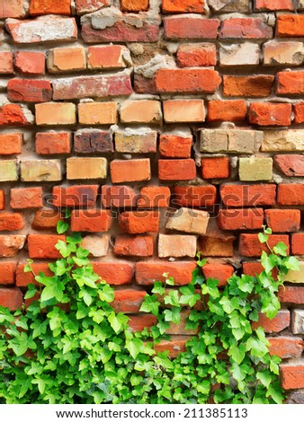 Old damaged and overgrown brick wall as background with copy space - stock photo
